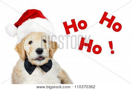 Puppy With Christmas Hat