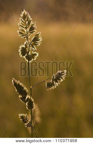 Blade of grass at sunset