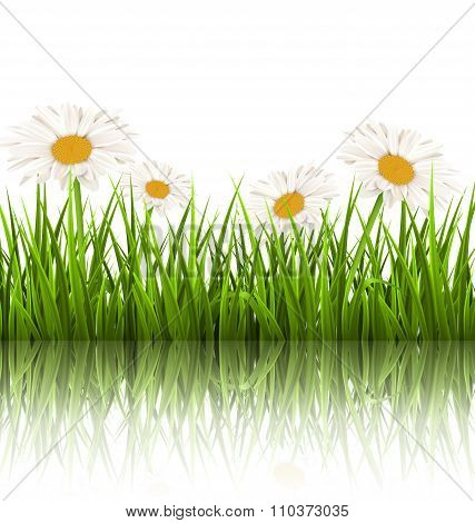 Green grass lawn with white chamomiles and reflection on white.