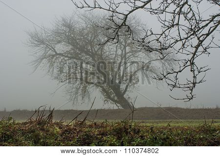 Tree In The Mist In Autumn