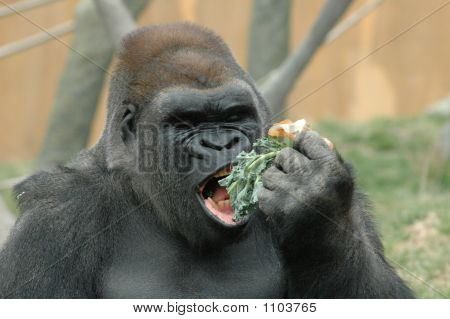 N'Sabi Eating!