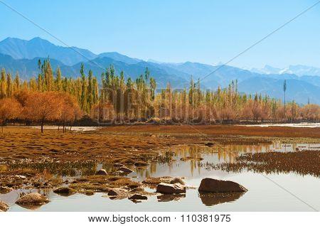 Holy Fish Pond at Shey Monastery, Leh Ladakh, India.