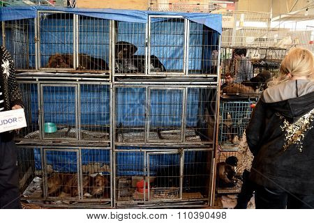 Dogs in cages for sale at a market in Baku, Azerbaijan