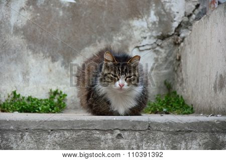 White and brown stray cat sitting on a wall in Baku, capital of Azerbaijan