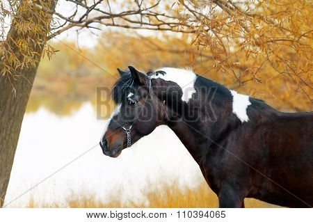 Beautiful portrait of a spotted horse on the background of the autumn landscape.