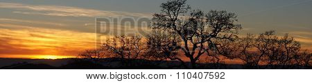 Panoramic Vivid Sunset with Trees