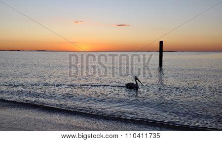 Pelican: Peaceful Indian Ocean Sunset