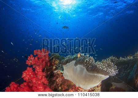 Underwater coral reef with sea anemones