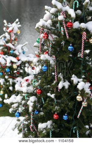 Christmas Trees 001