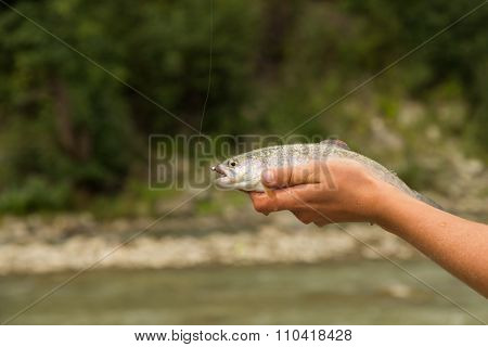 Trout fishing in a mountain river.