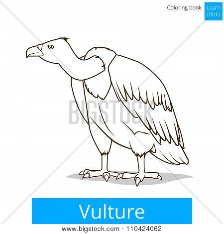 Vulture bird learn birds coloring book vector