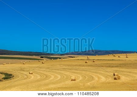 Yellow field and blue sky