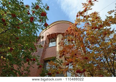 Rowan Trees On The Background Of A Brick Building And Blue Sky