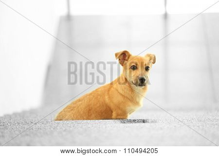 Small cute funny dog at stairs on light background