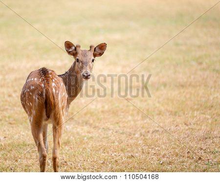 Cute Deer In The Park