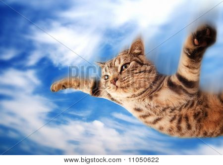 Flying funny kitten