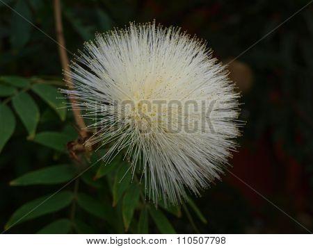 Interesting Round Flower