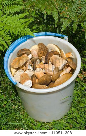 Bucket With Mushrooms