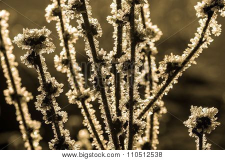 Crystals Snowflake Ice Frost Snow