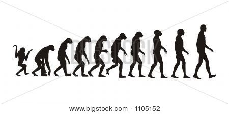 Menschliche Evolution