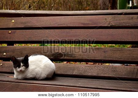 Lonely cat in the park