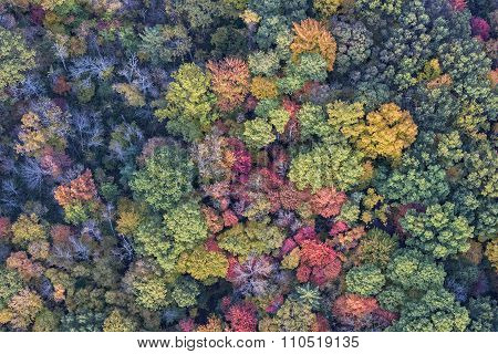 The Trees Of Autumn From Above