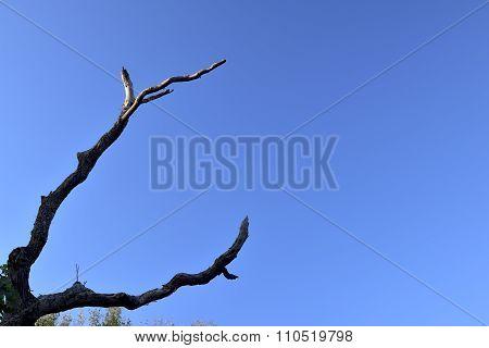 Deadwood with sky