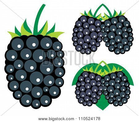 Blackberries Vector Illustrations