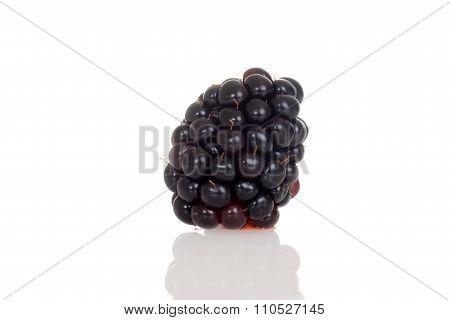 one blackberry