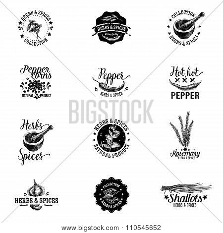 Vector set of herbs and spices labels, badges and hand drawn design elements.