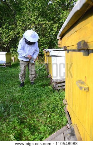 experienced apiarist making fumigation against diseases of bees in apiary in the autumn