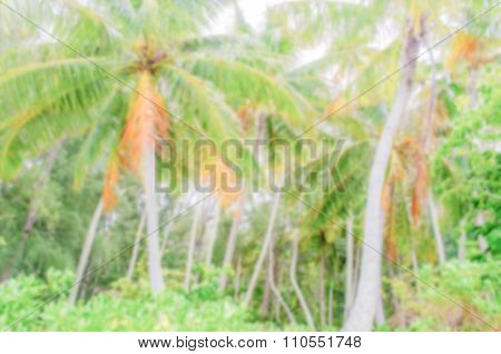 Defocused Background Of Tropical Forest In French Polynesia