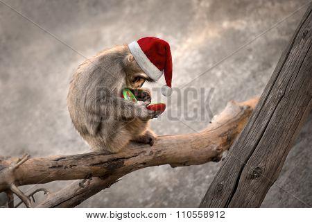 Monkey Santa Phone