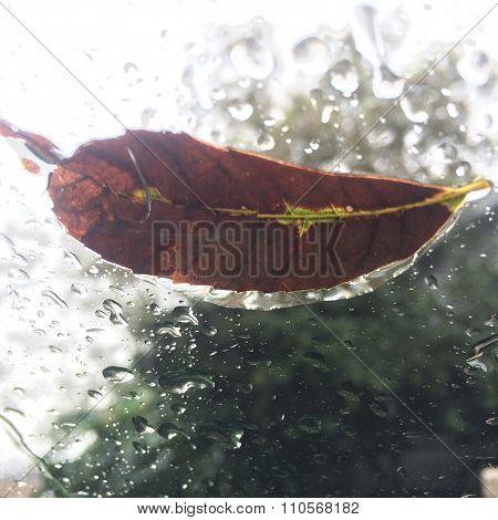Trickling Leaf