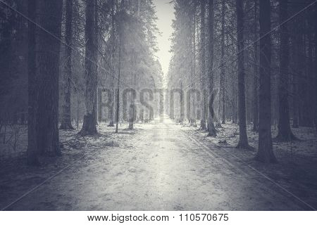 Narrow Road In The Forest.