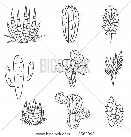 Succulents plant vector set. Botanical black and white cactus flora collection.