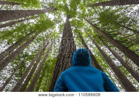 Man looking up in a forest