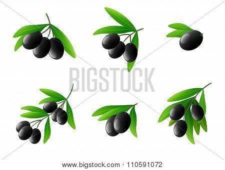 Black olives on branch vector set