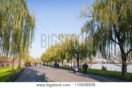 Willow Alley On The West Lake Coast