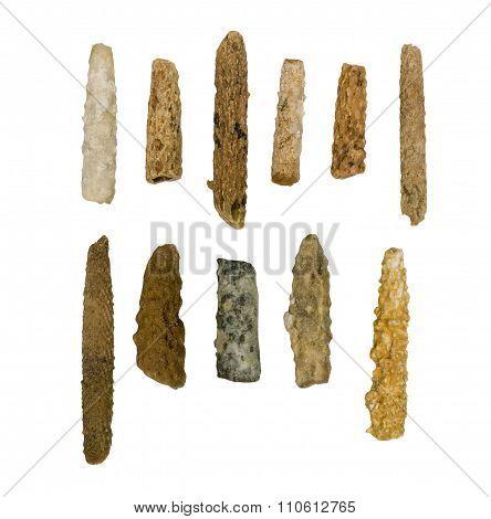 Needles of fossilized sea urchin