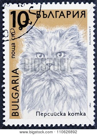 Cat on a postage stamp - isolated on black