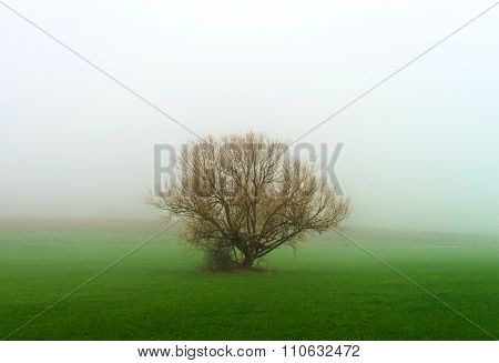 Winter Tree Silhouette In Great Fog