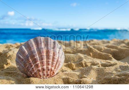 Seashell On The Sandy Beach Background