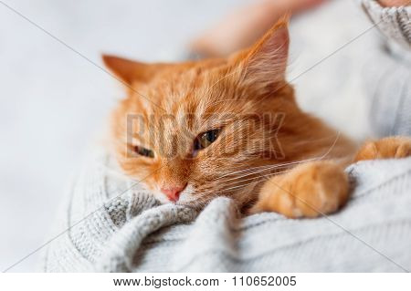 Man In Knitted Sweater Holding Angry Ginger Cat.