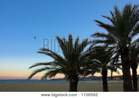 Evening Sunset On The Beach