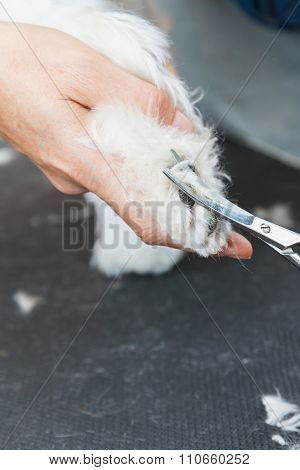 Cutting Hair At The Foot Of The Dog. Vertically.