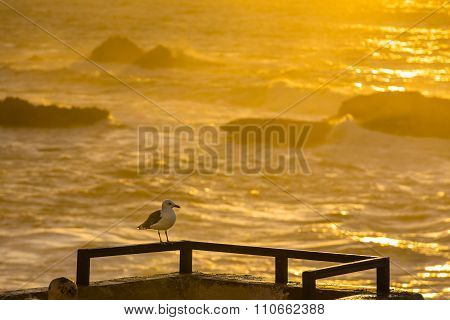 Sunset Over The Atlantic Ocean In Morocco