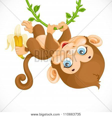 Cute Baby Monkey With Banana Hanging On The Vine Isolated On A W