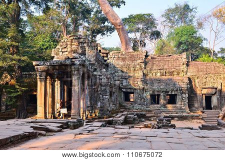 Ta Prohm Temple With Big Tree