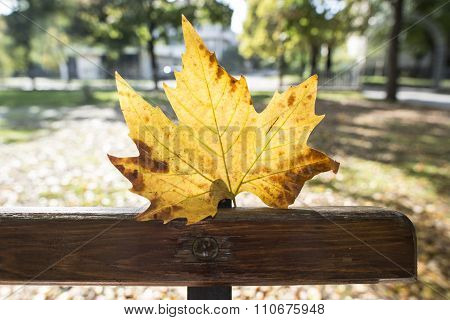 Autumn Leaf On A Bench In A Park